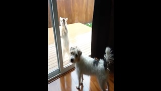 Cat wants to come in out of the rain - dog doesn't care - Video