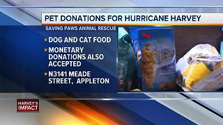 Saving Paws Animal Rescue collecting donations for pets in Texas - Video