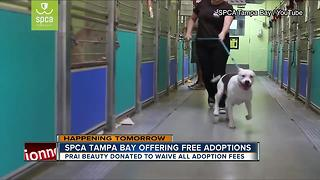 SPCA Tampa Bay waiving adoption fees this Saturday - Video