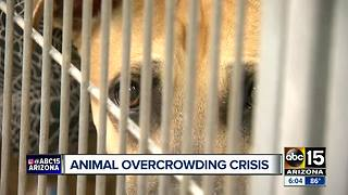County animal shelter in desperate need for help - Video