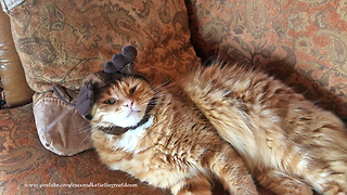Depressed Cat Is Forced To Wear Hilarious Antler Hat