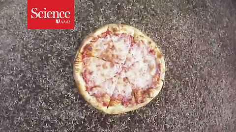 Watch larva devour a pizza in 2 hours