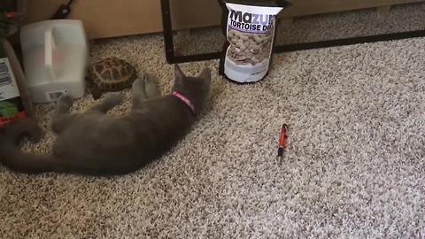 Kitten shares unusual friendship with pet tortoise