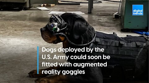 U.S. Army considers AR goggles for its military mutts