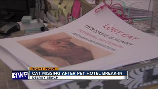 Cat missing after Delray Beach pet hotel break-in