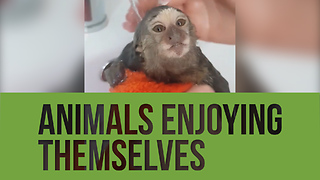 Check out this compilation of animals totally enjoying themselves! - Video