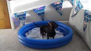 Delightful Dog Reacts With Sheer Euphoria to Birthday Surprise