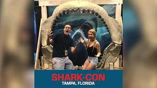 Shark-Con arrives in Tampa Bay - Video