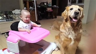 Baby Thinks Dog Playing Catch Is A Delight