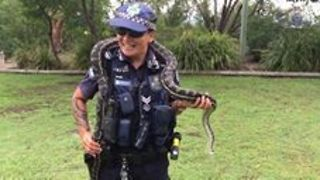 Police Officer Reunites With Python After Eight Years, Freaks Out - Video
