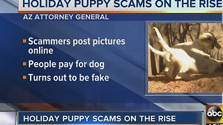 Watch out for puppy scams this holiday season - Video