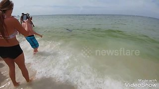 Shark swims incredibly close to shore off US beach - Video