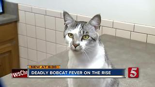 Deadly Feline Disease On The Rise - Video