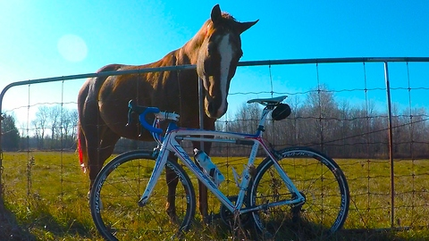 Horse annoyed with cyclist when treats run out