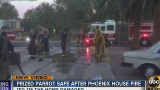 Prized parrot okay tonight after home catches on fire - Video