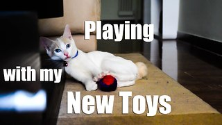 Kitten playing with his new toys - Video