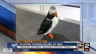 Stuffed puffin found at BWI - Video