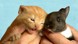 Cat Adopts Baby Rabbit - Video