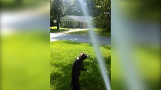 Puppy's Summertime Fun - Video