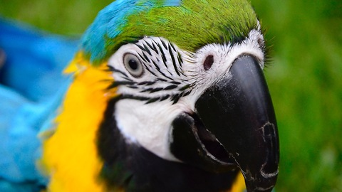 Incredibly smart parrot knows his colors