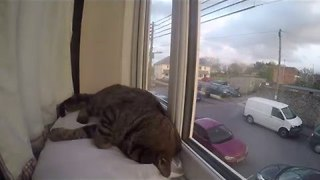 Cute Cat Has a Nap in Timelapse Video - Video