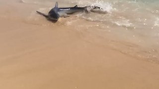 Shark Captured After Causing Panic Among Holidaymakers in Mallorca - Video