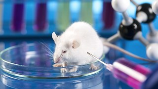 10 Horrific Animal Experiments - Video