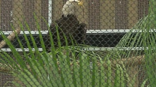Conservancy opens expanded animal hospital - Video