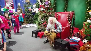 Rescued pit bull meets Santa, can't contain excitement - Video