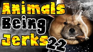 Animals Being Jerks #22 - Video