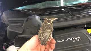 Bird Found Living Inside Engine Air Filter Housing - Video