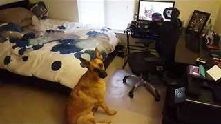 Howling Dog Inception Craze Continues - Video