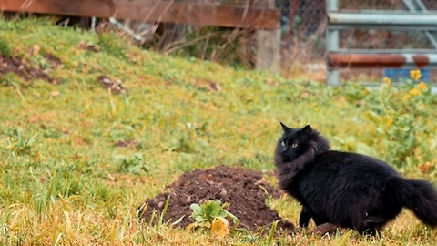 From feral to farm: A cat's life in Spokane