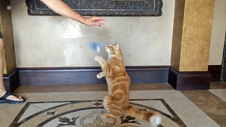 Jack the Cat Dances for Catnip Mouse - Video