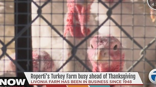 Turkey farm busy ahead of Thanksgiving - Video
