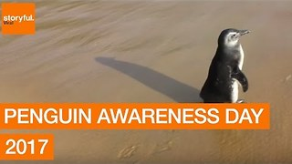 Happy Penguin Awareness Day 2017 - Video