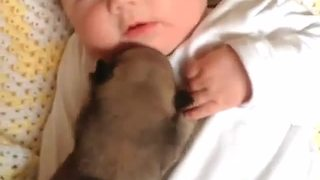 Newborn Puppy Snuggles With A Baby  - Video