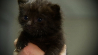 Kitten Found on London Underground - Video