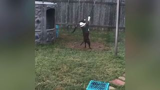 Dog Loves Playing On Swings - Video