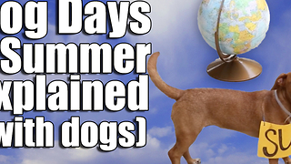 Dog Days of Summer Explained (with dogs) - Video