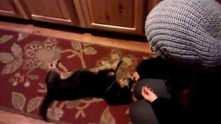 Little Dog Shows Off His Super Cute Tricks - Video