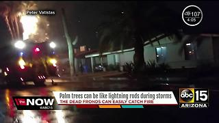 Time to take action around your property protecting palm trees from the monsoon - Video