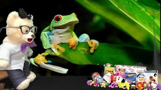 Learn about Frogs with Chumsky Bear! | Biology | Educational Videos for Kids
