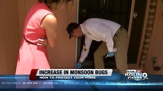 Local pest control companies see an increase in bugs from monsoon - Video