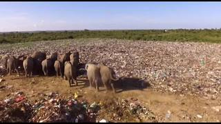 Six elephants dead after eating plastic at Sri Lanka rubbish landfill