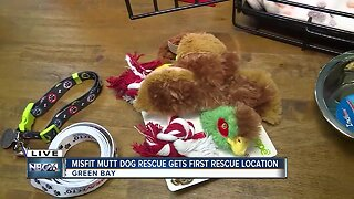 Misfit mutts dog rescue