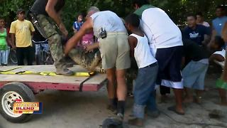 Croc Couple: Stay Away From Croc Traps! - Video