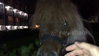 Pony gallops around park on East London housing estate - Video