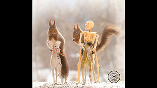 Game of thrones squirrel scenes