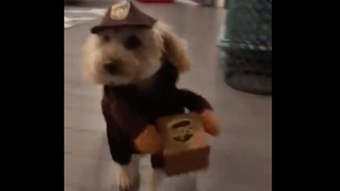 """""""SPECIAL DELIVERY"""" 10/10 would sign for this package!"""